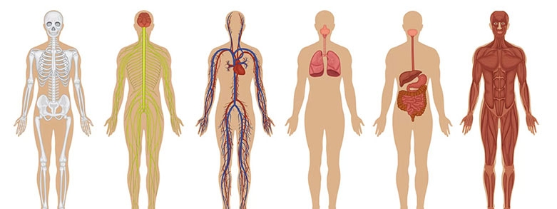 Vad har zink för funktion i vår kropp?
